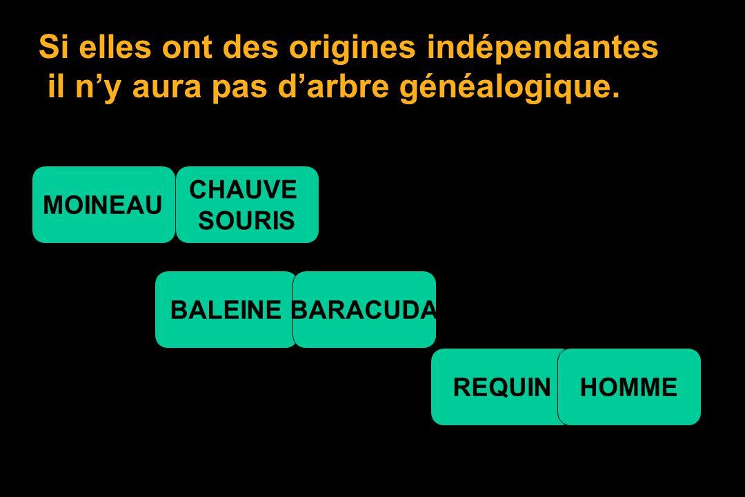 ENTRE LES ESPECES AUSSI Il y a plus ou moins de différences génétiques. REQUIN BARACUDA MOINEAU HOMME CHAUVE SOURIS BALEINE