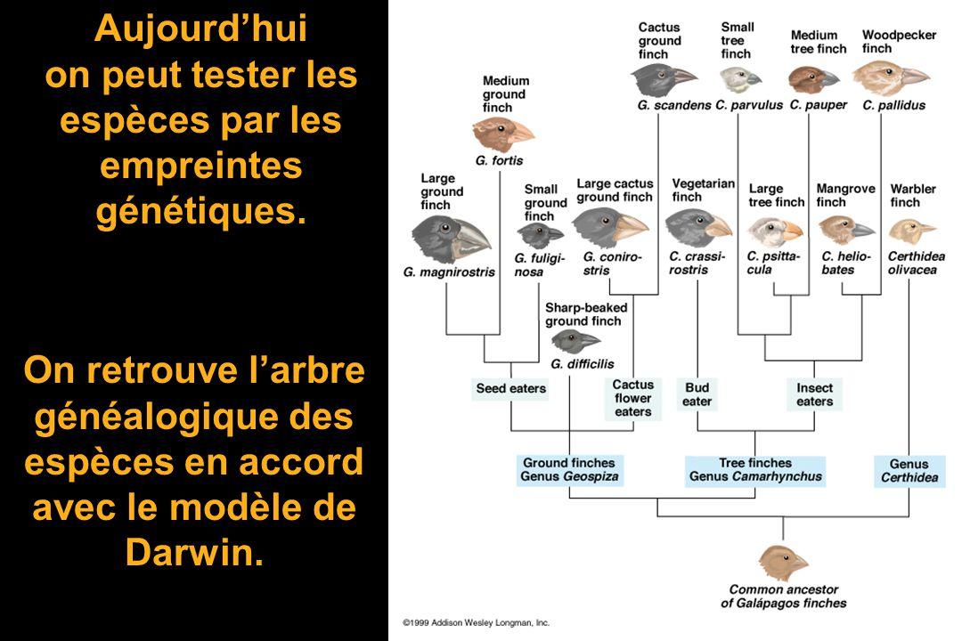 Si elles sont apparentées on trouvera un arbre généalogique (phylétique) ! REQUINBARACUDAMOINEAU HOMME CHAUVE SOURIS Cest ce que lon obtient BALEINE
