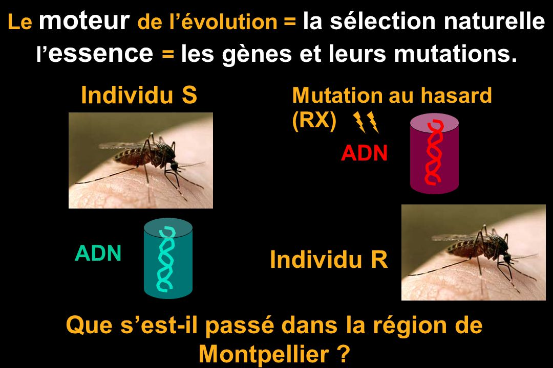 La sélection naturelle sous nos yeux Les résistances: des virus aux substances antivirales des bactéries aux antibiotiques, des plantes aux herbicides