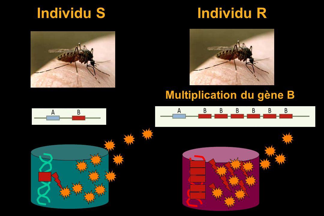 Le moteur de lévolution = la sélection naturelle l essence = les gènes et leurs mutations. ADN Individu S Individu R Mutation au hasard (RX) Dans les