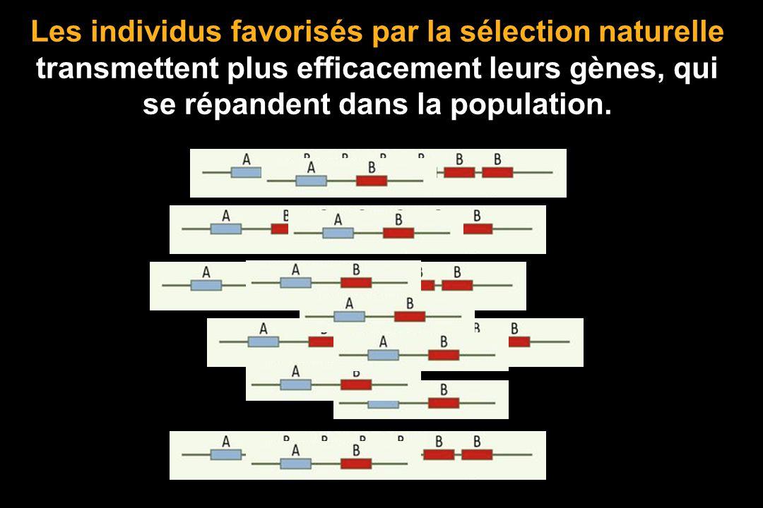 La population est modifiée: Sensible > Résistante. La sélection naturelle ne modifie pas les individus mais elle trie les géniteurs compte tenu de len