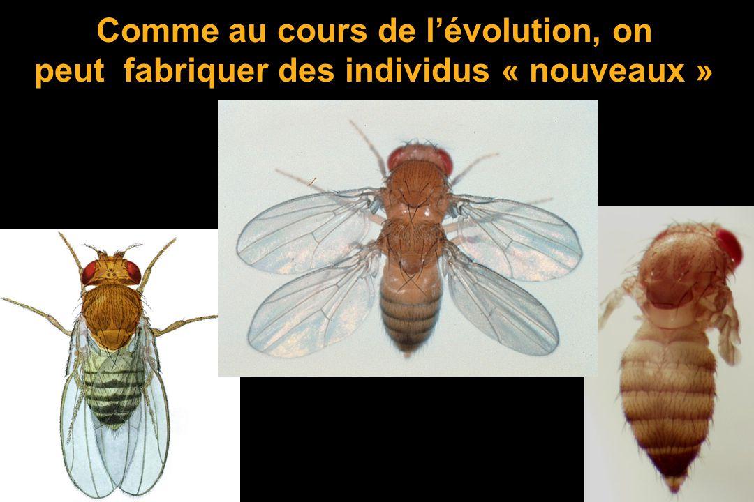 Bon pour les gènes et la sélection naturelle. Mais pour des organes comme les ailes ou les yeux ? Donc il ne faut pas dire: « les individus sadaptent