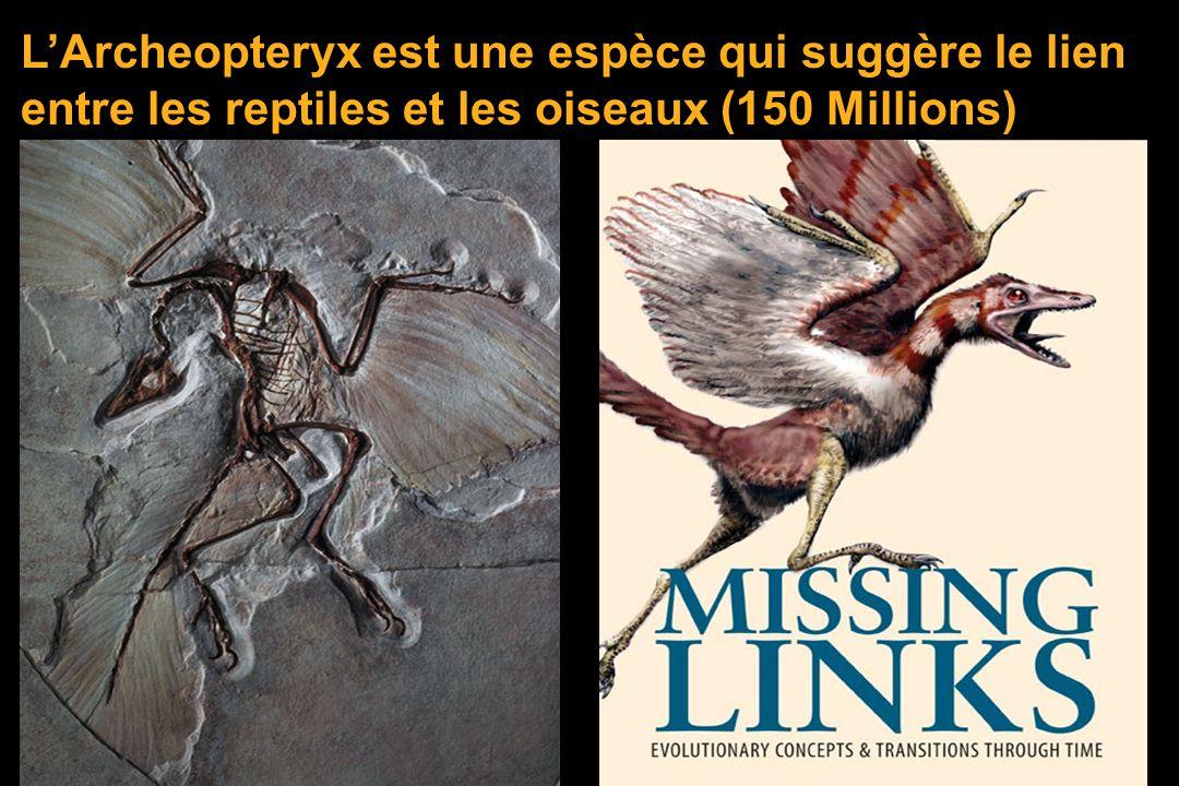 Archeopteryx Darwin + La paléontologie :