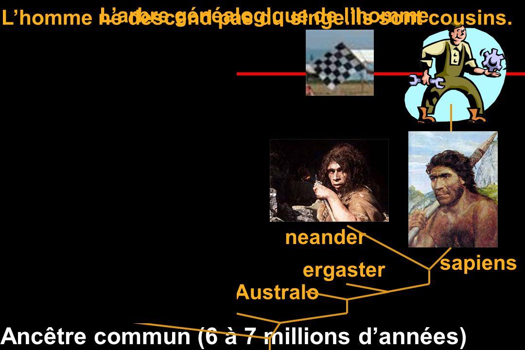Il a 50 000 à 200 000 ans 1 million 2 millions 6-7 millions La grande famille de lhomme