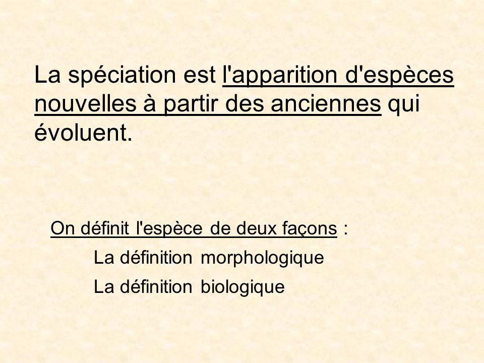 La spéciation est l'apparition d'espèces nouvelles à partir des anciennes qui évoluent. On définit l'espèce de deux façons : La définition morphologiq