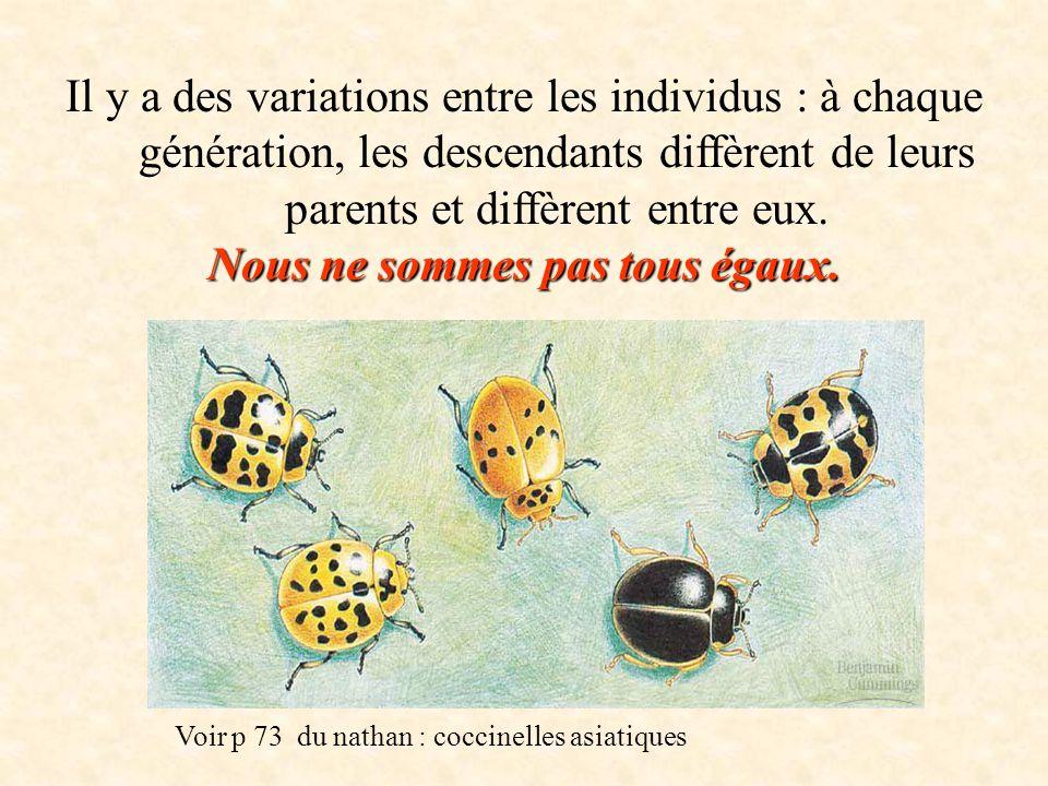 Il y a des variations entre les individus : à chaque génération, les descendants diffèrent de leurs parents et diffèrent entre eux. Nous ne sommes pas