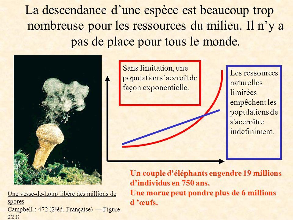 Sources biblio http://www.er.uqam.ca/nobel/m146350/selectionnaturelle.htm# http://genet.univ-tours.fr//gen001700_fichiers/htm/ch8a/gen12ch8aec13.htm
