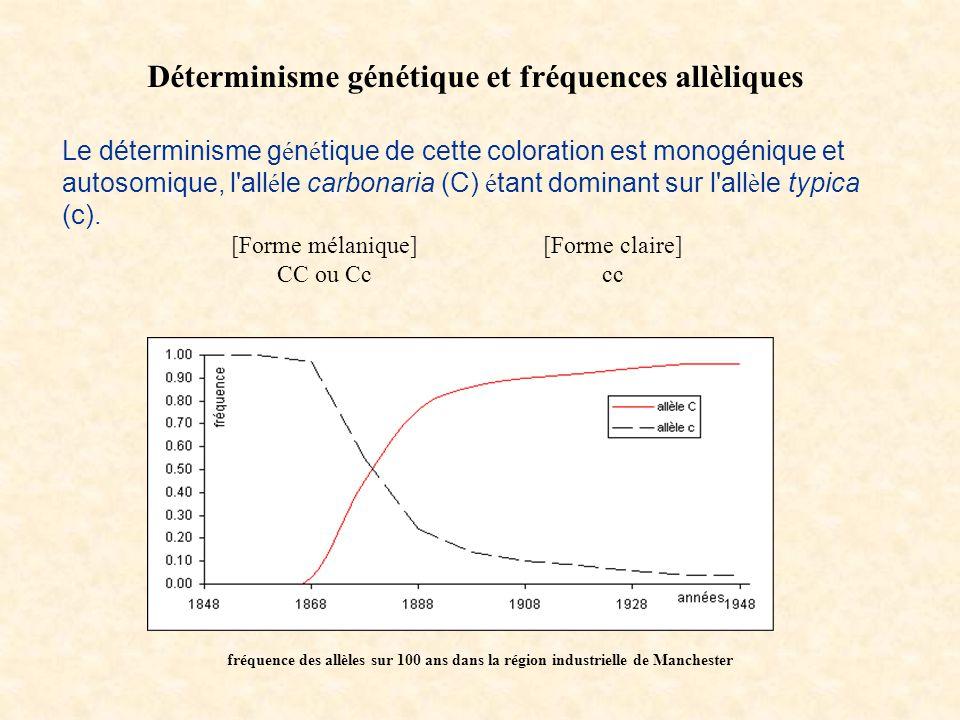 Déterminisme génétique et fréquences allèliques [Forme mélanique] CC ou Cc [Forme claire] cc Le déterminisme g é n é tique de cette coloration est mon