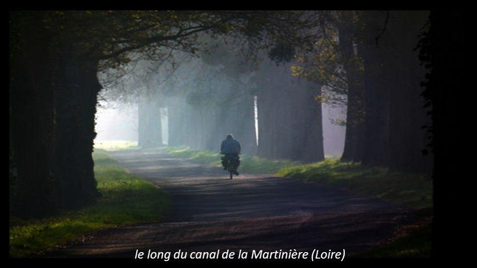 le long du canal de la Martinière (Loire)