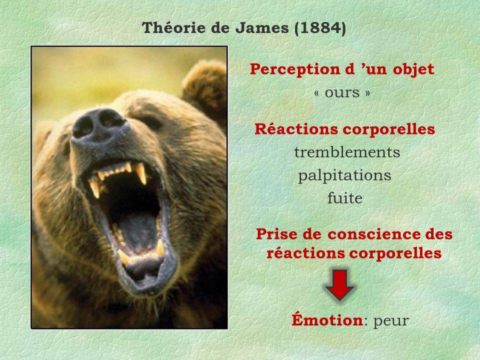 Théorie de James (1884) Perception d un objet « ours » Réactions corporelles tremblements palpitations fuite Prise de conscience des réactions corporelles Émotion : peur