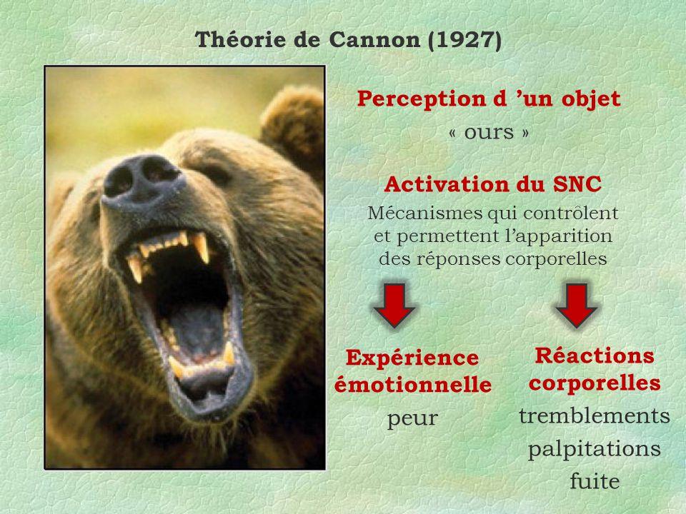 Théorie de Cannon (1927) Perception d un objet « ours » Activation du SNC Mécanismes qui contrôlent et permettent lapparition des réponses corporelles Expérience émotionnelle peur Réactions corporelles tremblements palpitations fuite