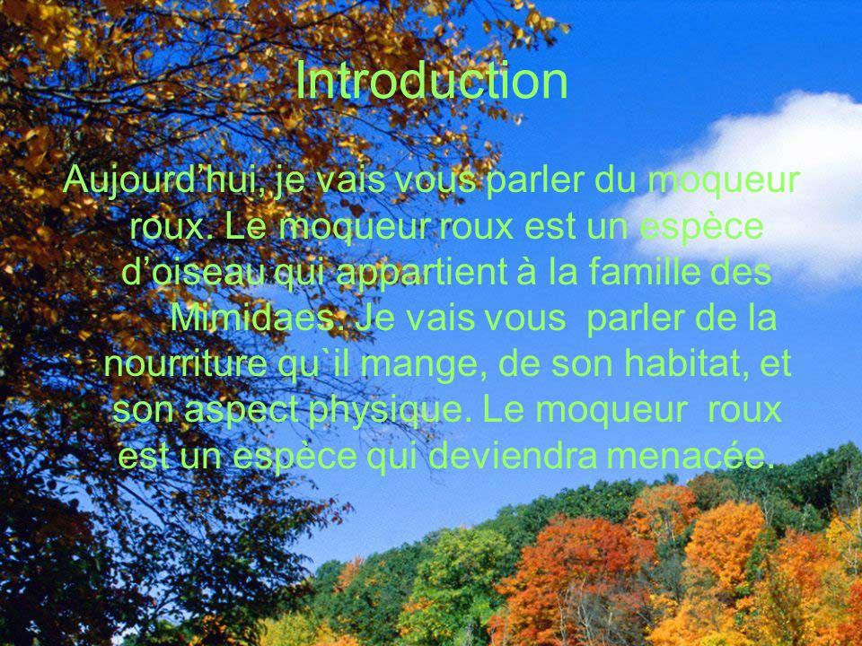 Introduction Aujourdhui, je vais vous parler du moqueur roux.