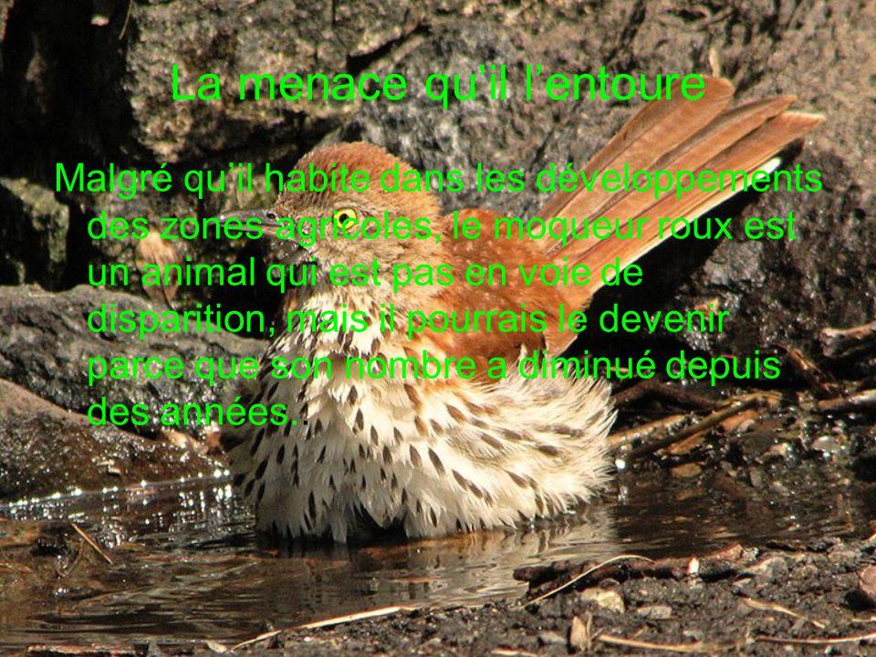 La menace quil lentoure Malgré quil habite dans les développements des zones agricoles, le moqueur roux est un animal qui est pas en voie de disparition, mais il pourrais le devenir parce que son nombre a diminué depuis des années..