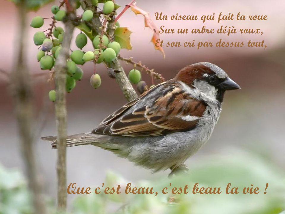 Un oiseau qui fait la roue Sur un arbre déjà roux, Et son cri par dessus tout, Que c est beau, c est beau la vie !