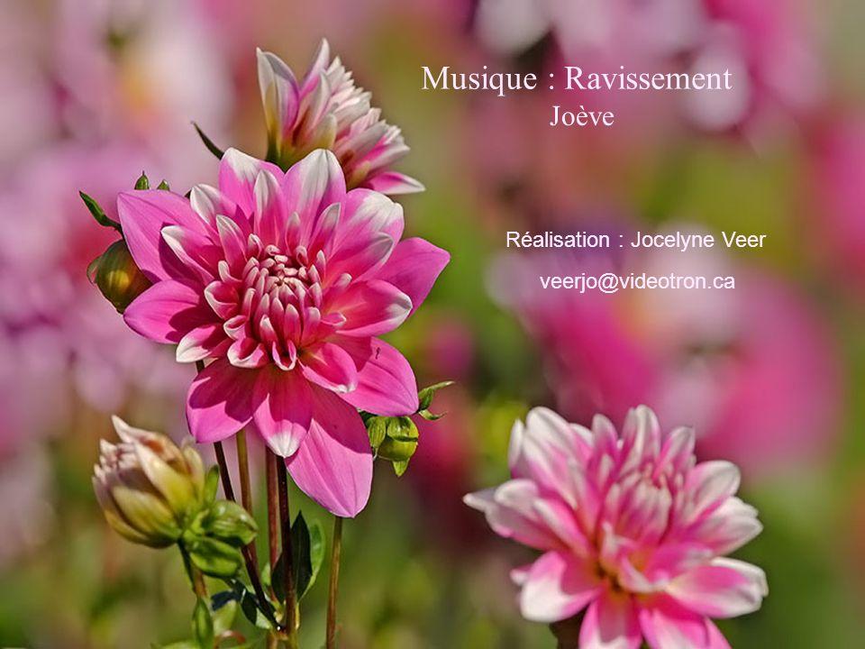 Musique : Ravissement Réalisation : Jocelyne Veer veerjo@videotron.ca Joève