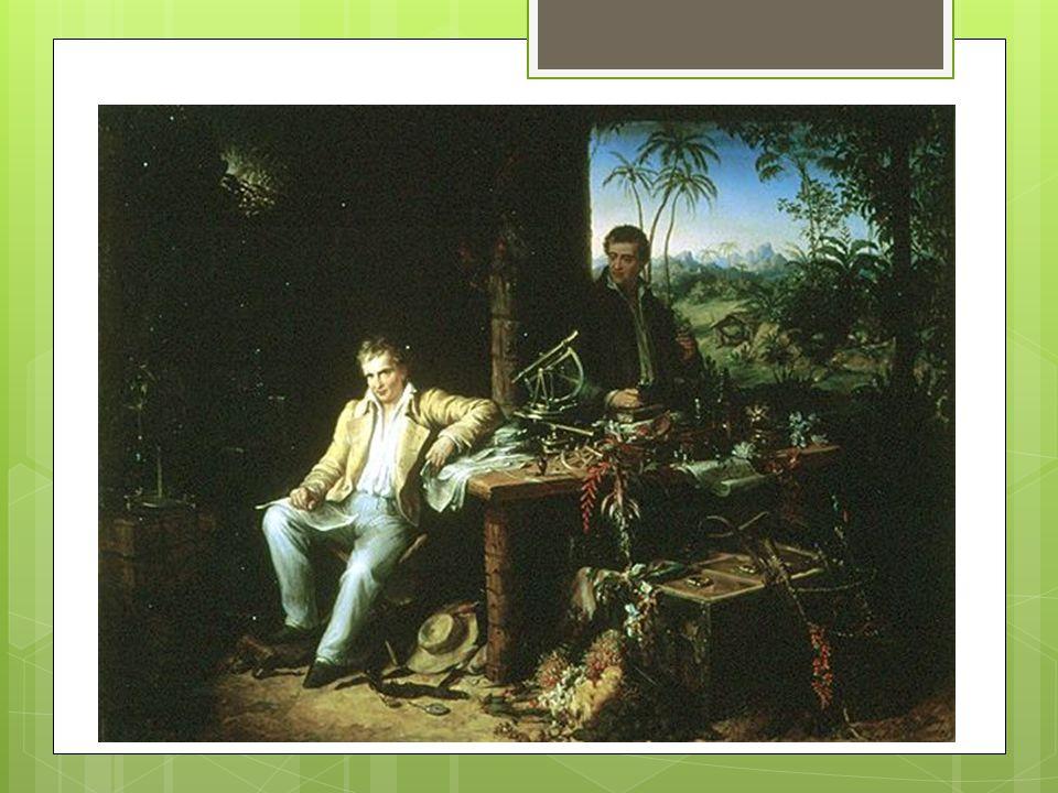 Alexandre de Humboldt Physicien et naturaliste du XVIII e - XIX e siècle Considéré comme le créateur de la géographie botanique Etudie la répartition