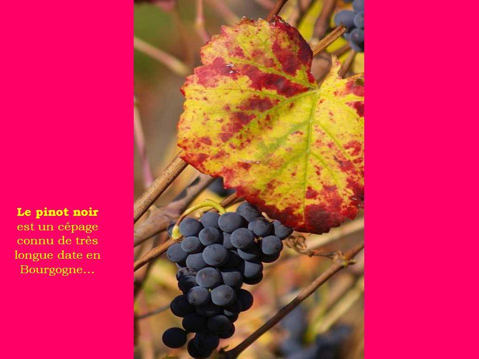 Le Clos Vougeot, mondialement célèbre comme l un des fleurons du vignoble bourguignon, il fût construit, au XII ème siècle, par les moines de Cîteaux.