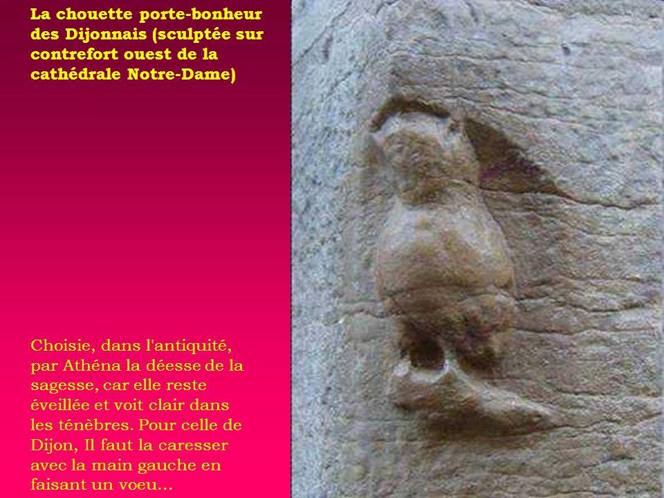 La chouette porte-bonheur des Dijonnais (sculptée sur contrefort ouest de la cathédrale Notre-Dame) Choisie, dans l antiquité, par Athéna la déesse de la sagesse, car elle reste éveillée et voit clair dans les ténèbres.