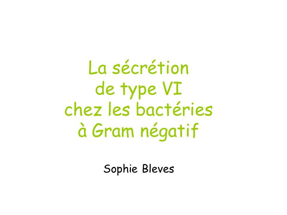 La sécrétion de type VI chez les bactéries à Gram négatif Sophie Bleves