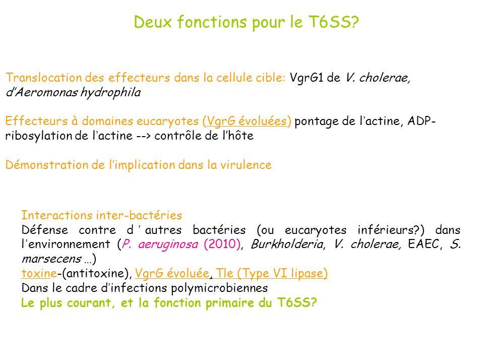 Deux fonctions pour le T6SS? Translocation des effecteurs dans la cellule cible: VgrG1 de V. cholerae, dAeromonas hydrophila Effecteurs à domaines euc