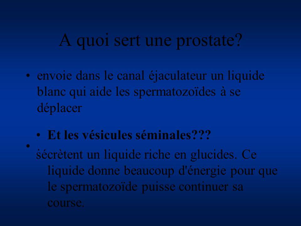 A quoi sert une prostate? envoie dans le canal éjaculateur un liquide blanc qui aide les spermatozoïdes à se déplacer. Et les vésicules séminales??? s
