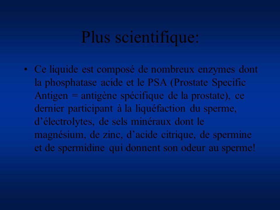 Plus scientifique: Ce liquide est composé de nombreux enzymes dont la phosphatase acide et le PSA (Prostate Specific Antigen = antigène spécifique de
