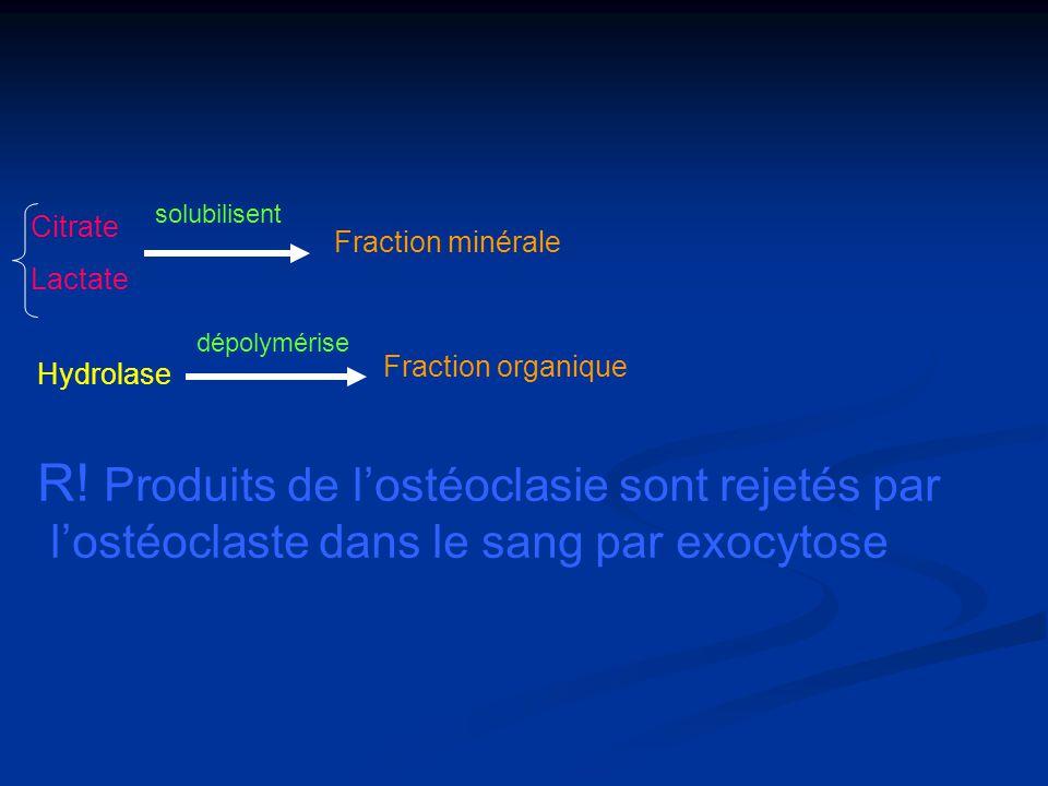Citrate Lactate solubilisent Fraction minérale Hydrolase dépolymérise Fraction organique R! Produits de lostéoclasie sont rejetés par lostéoclaste dan