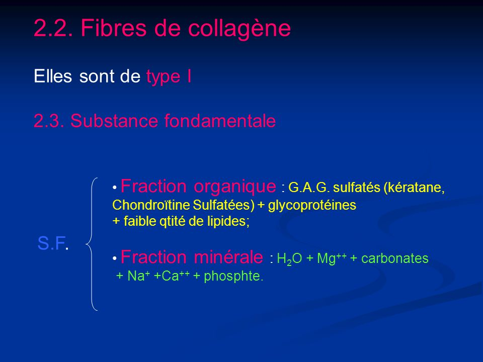 2.2. Fibres de collagène Elles sont de type I 2.3. Substance fondamentale S.F. Fraction organique : G.A.G. sulfatés (kératane, Chondroïtine Sulfatées)