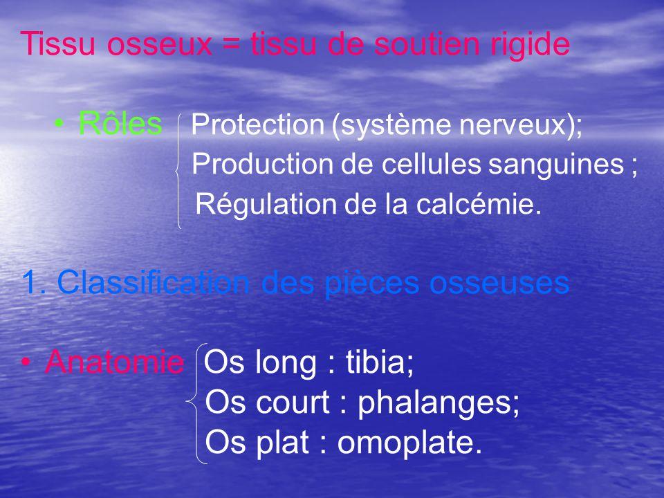 1.Ossification primaire de lépiphyse Pdt vie Σaire Épiphyse = cartilage hyalin B.C.V.