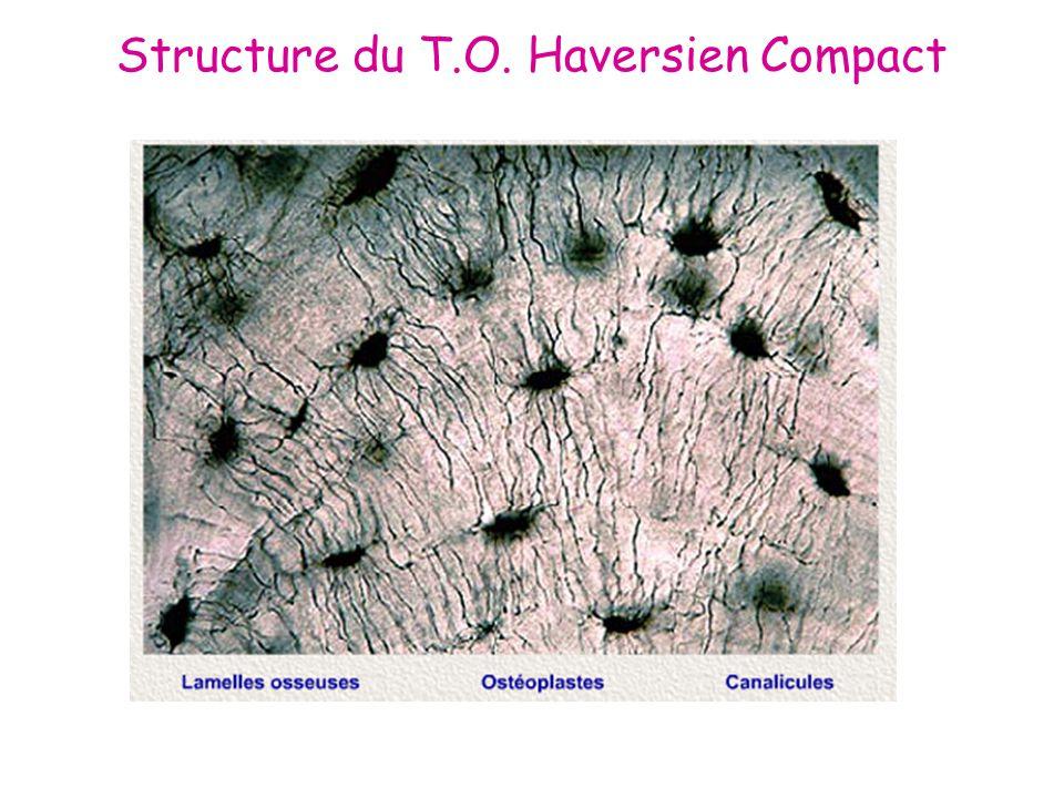 Structure du T.O. Haversien Compact