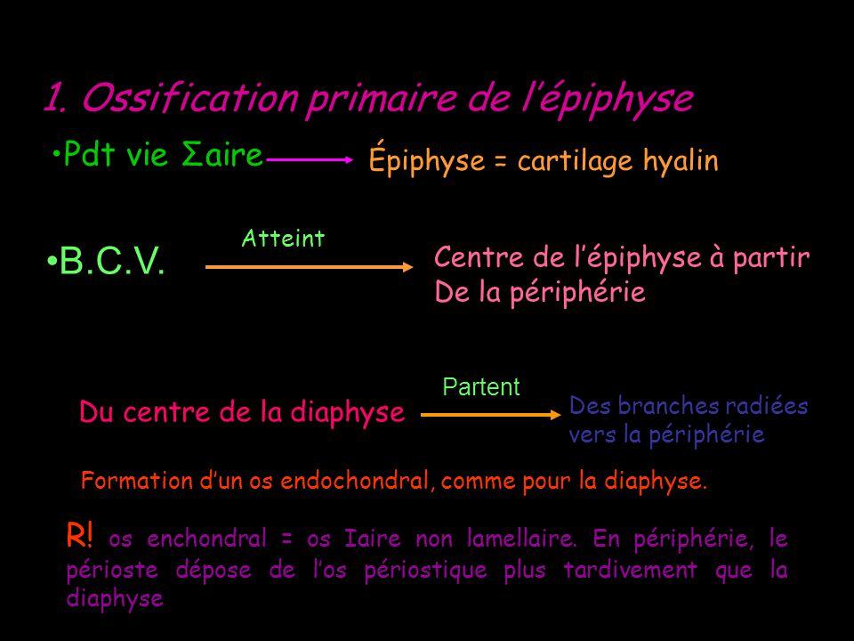 1. Ossification primaire de lépiphyse Pdt vie Σaire Épiphyse = cartilage hyalin B.C.V. Atteint Centre de lépiphyse à partir De la périphérie Du centre