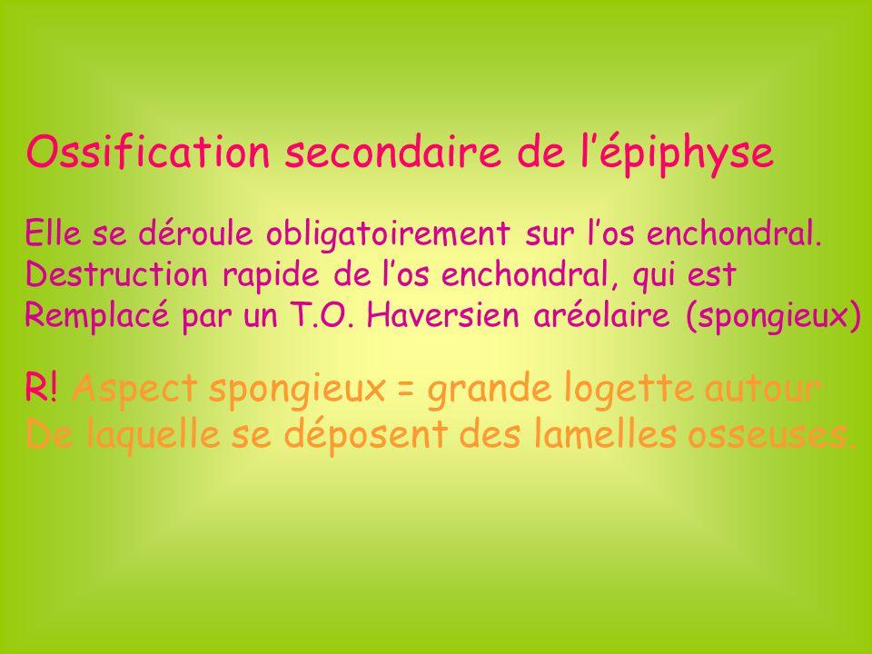 Ossification secondaire de lépiphyse Elle se déroule obligatoirement sur los enchondral. Destruction rapide de los enchondral, qui est Remplacé par un
