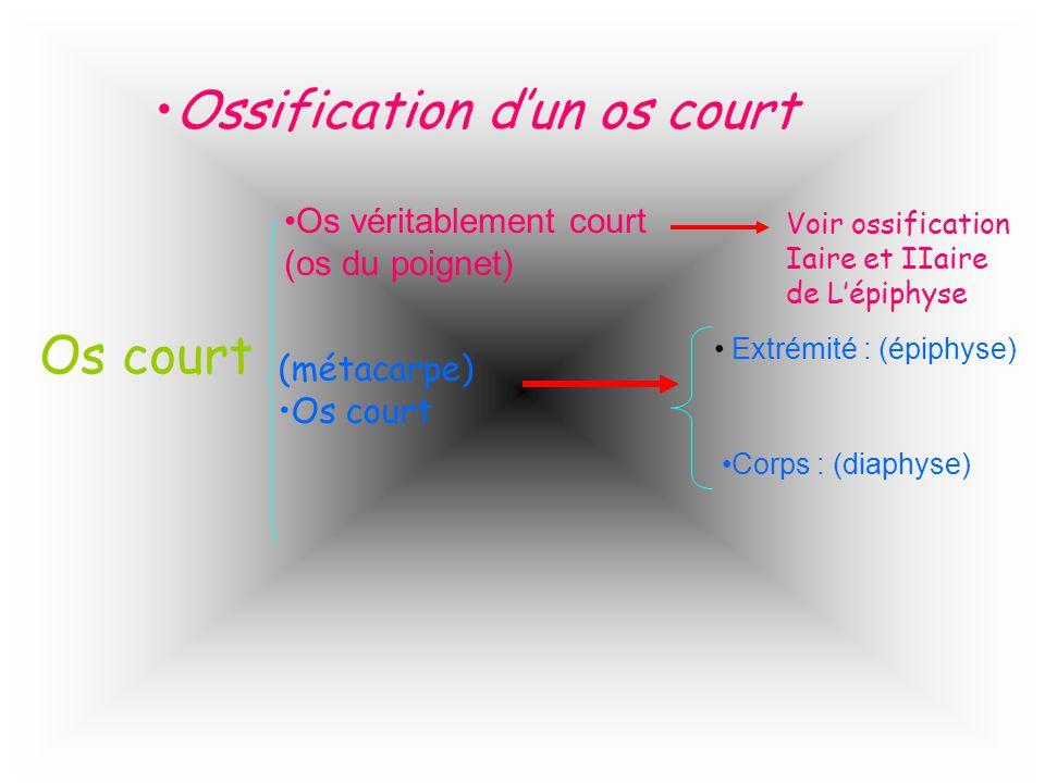 Ossification dun os court Os court Os véritablement court (os du poignet) Voir ossification Iaire et IIaire de Lépiphyse (métacarpe) Os court Extrémit