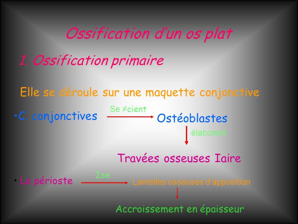 Ossification dun os plat 1. Ossification primaire Elle se déroule sur une maquette conjonctive C. conjonctives Se cient Ostéoblastes élaborent Travées