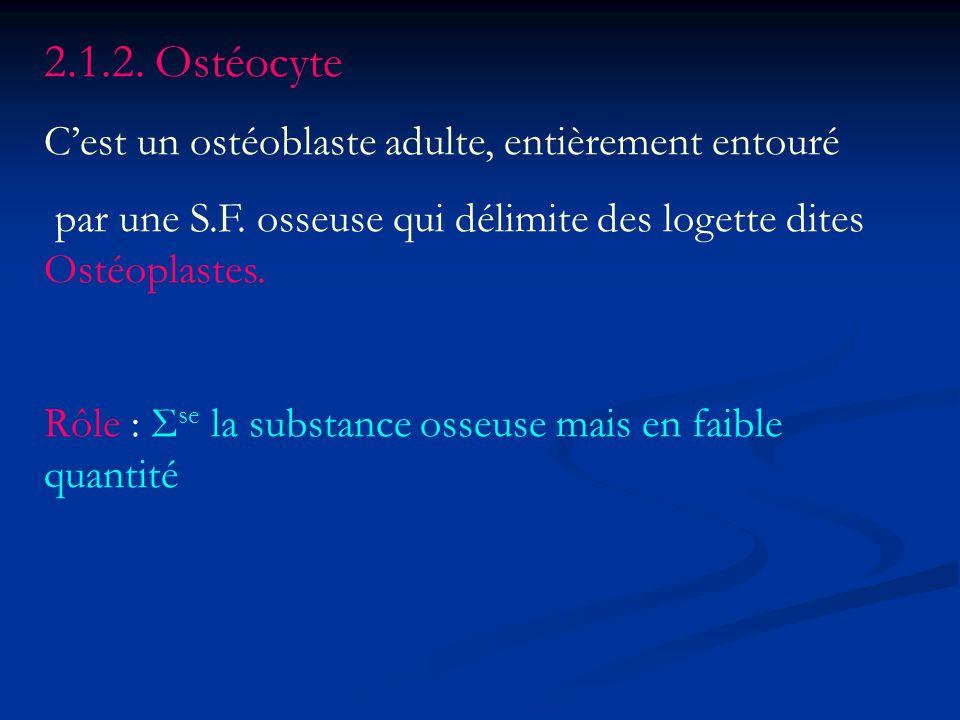 2.1.2. Ostéocyte Cest un ostéoblaste adulte, entièrement entouré par une S.F. osseuse qui délimite des logette dites Ostéoplastes. Rôle : Σ se la subs