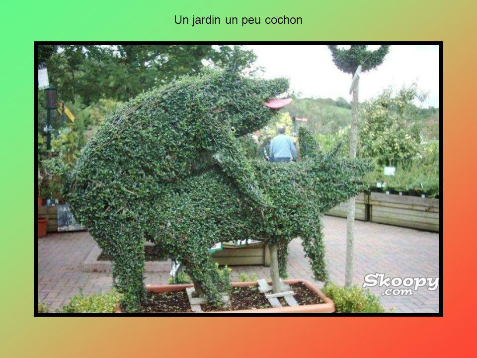 Un jardin un peu cochon