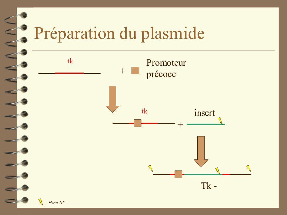 Préparation du plasmide tk + + Promoteur précoce insert Tk - Hind III