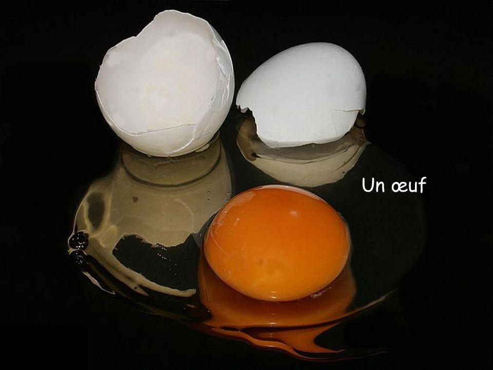 Un œuf