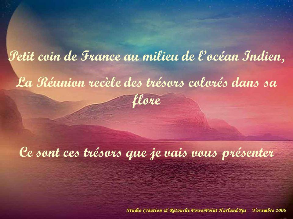 Petit coin de France au milieu de locéan Indien, La Réunion recèle des trésors colorés dans sa flore Ce sont ces trésors que je vais vous présenter
