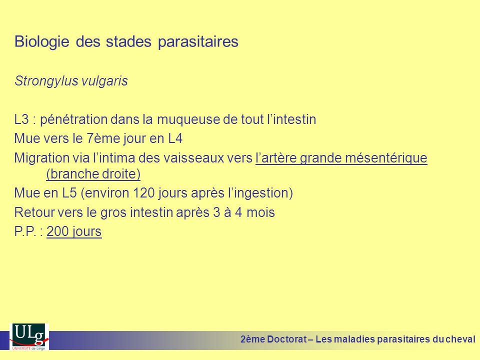 Biologie des stades parasitaires Strongylus vulgaris L3 : pénétration dans la muqueuse de tout lintestin Mue vers le 7ème jour en L4 Migration via lin