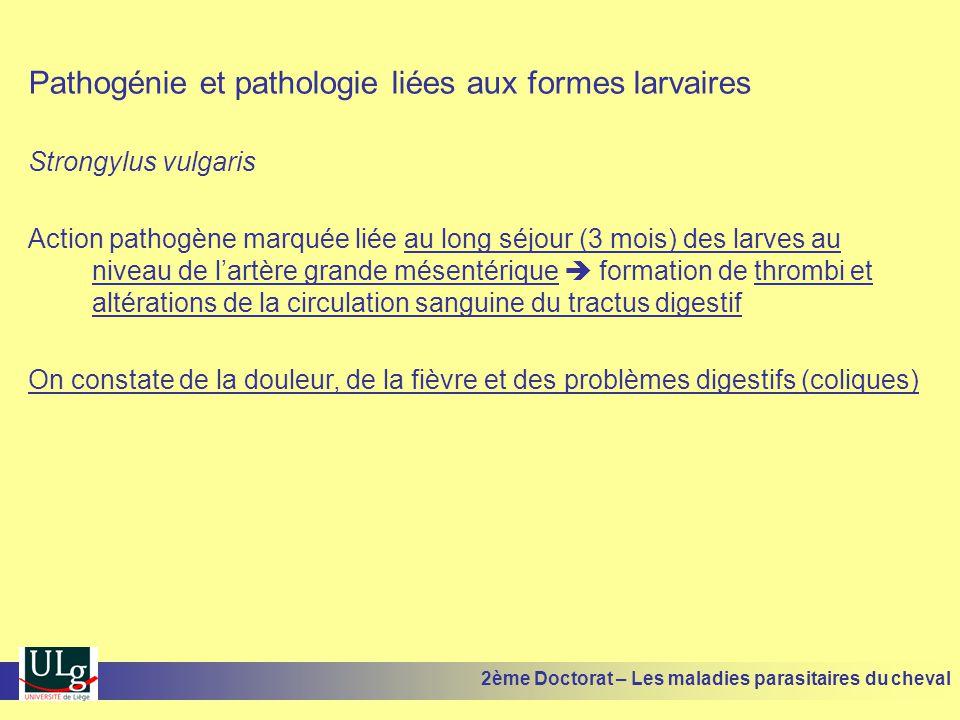 Pathogénie et pathologie liées aux formes larvaires Strongylus vulgaris Action pathogène marquée liée au long séjour (3 mois) des larves au niveau de