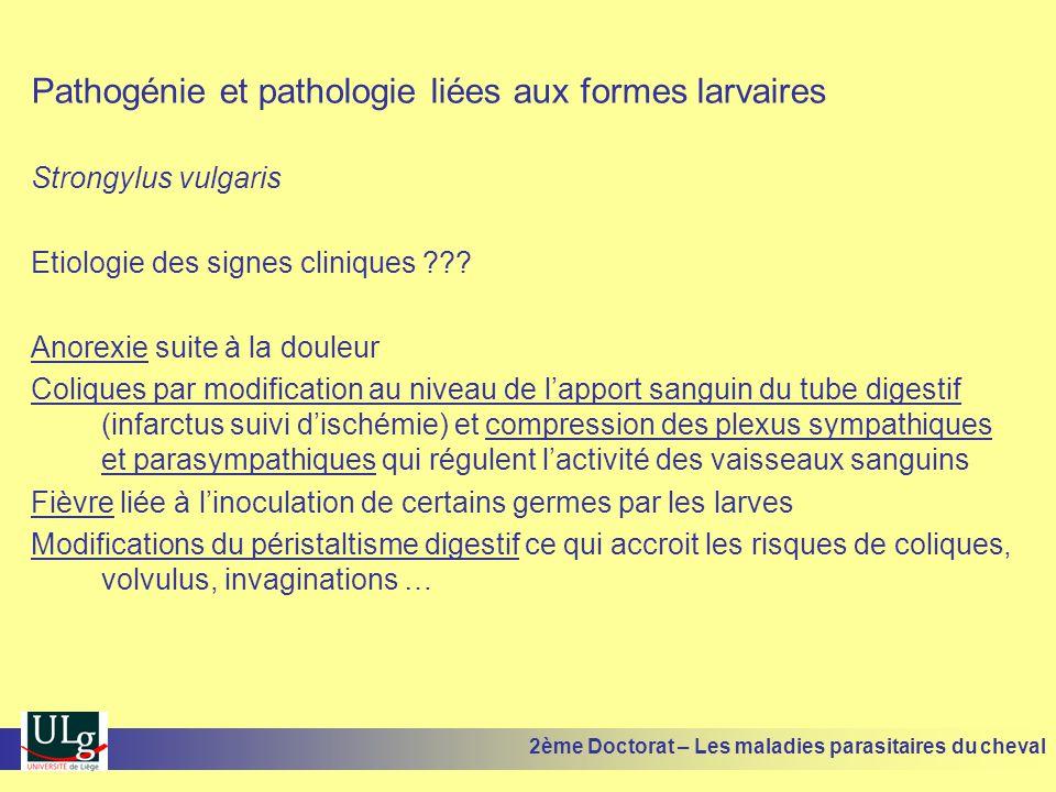 Pathogénie et pathologie liées aux formes larvaires Strongylus vulgaris Etiologie des signes cliniques ??? Anorexie suite à la douleur Coliques par mo