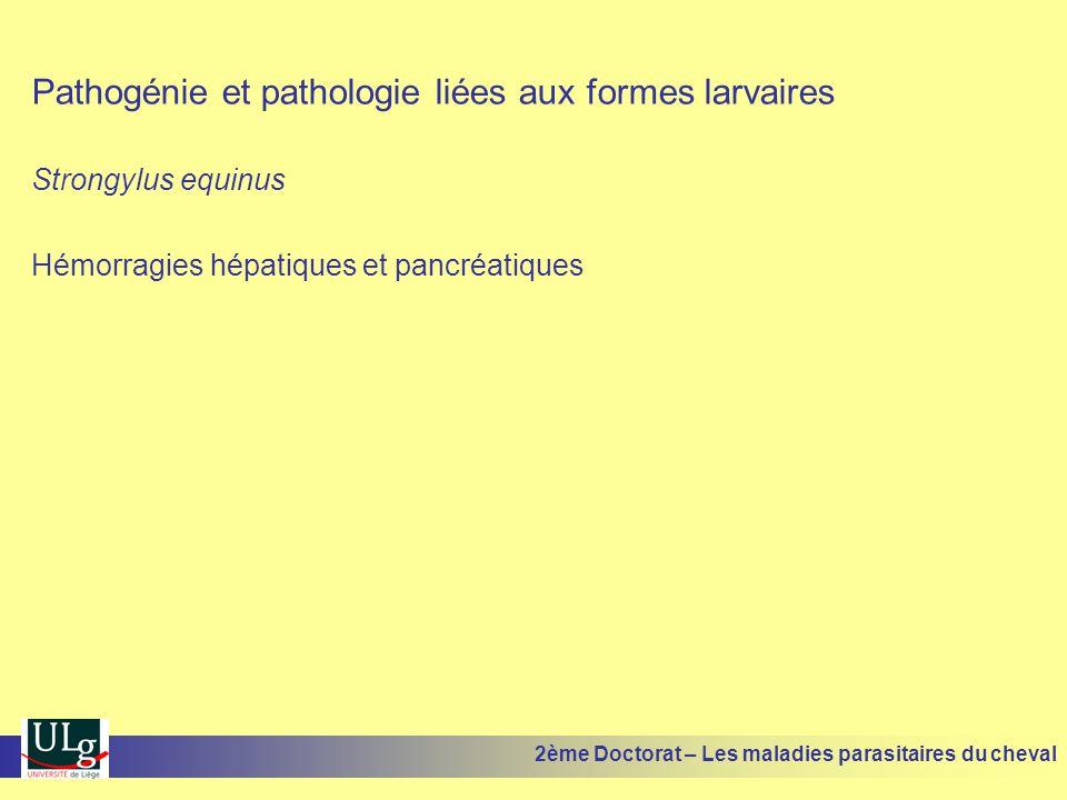 Pathogénie et pathologie liées aux formes larvaires Strongylus equinus Hémorragies hépatiques et pancréatiques 2ème Doctorat – Les maladies parasitair