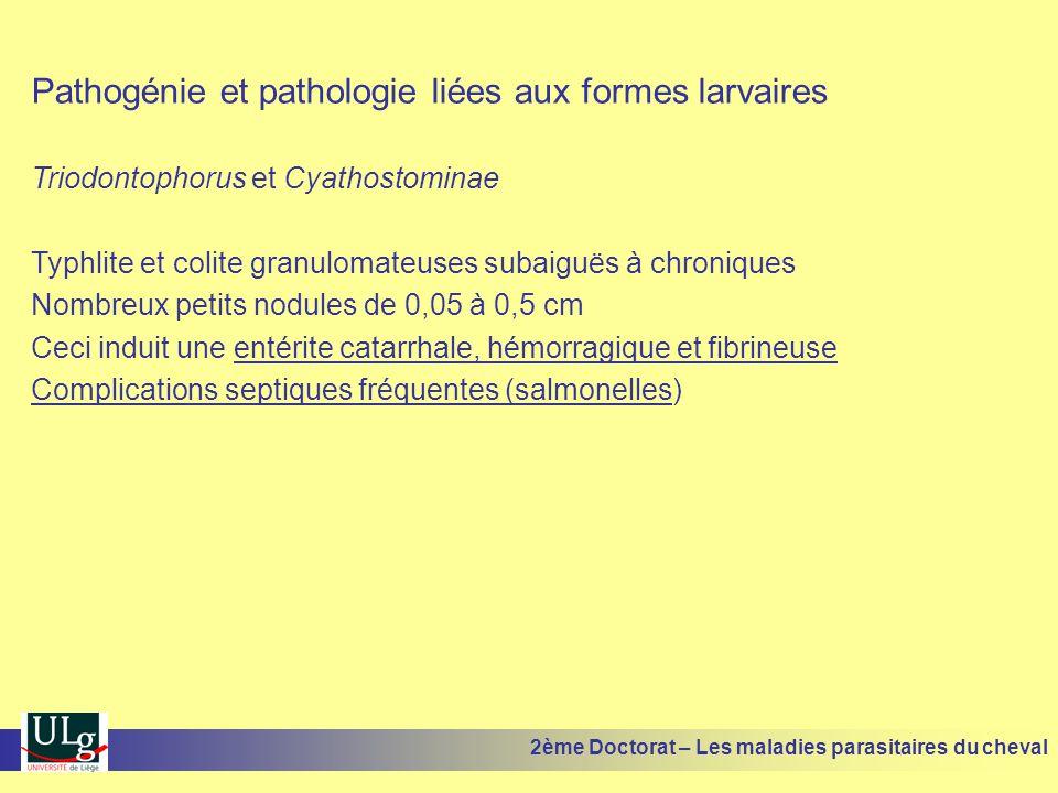 Pathogénie et pathologie liées aux formes larvaires Triodontophorus et Cyathostominae Typhlite et colite granulomateuses subaiguës à chroniques Nombre