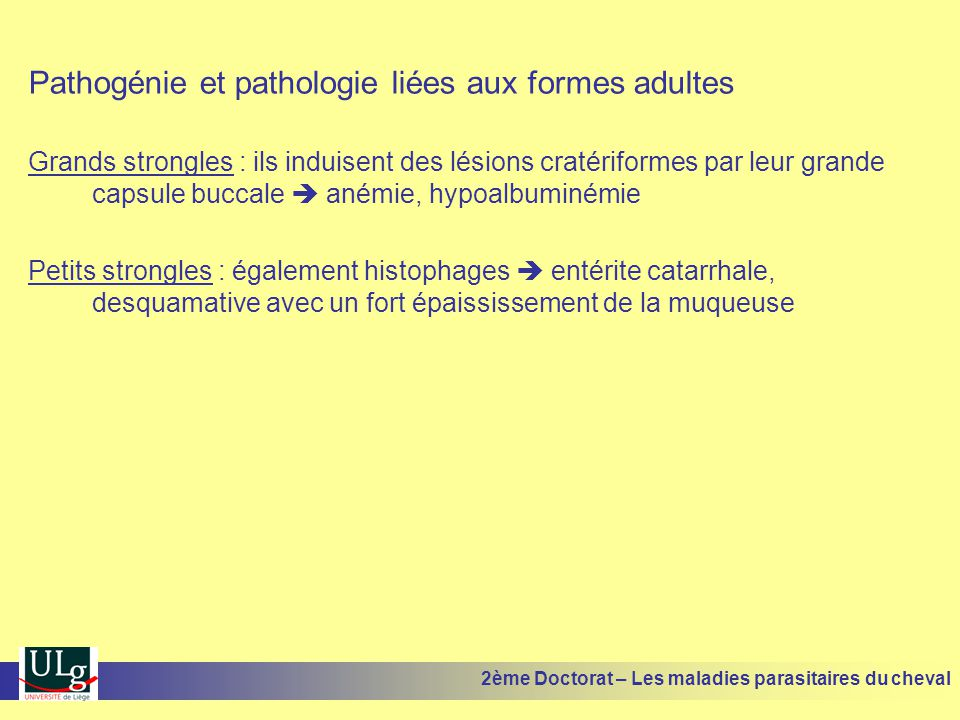 Pathogénie et pathologie liées aux formes adultes Grands strongles : ils induisent des lésions cratériformes par leur grande capsule buccale anémie, h