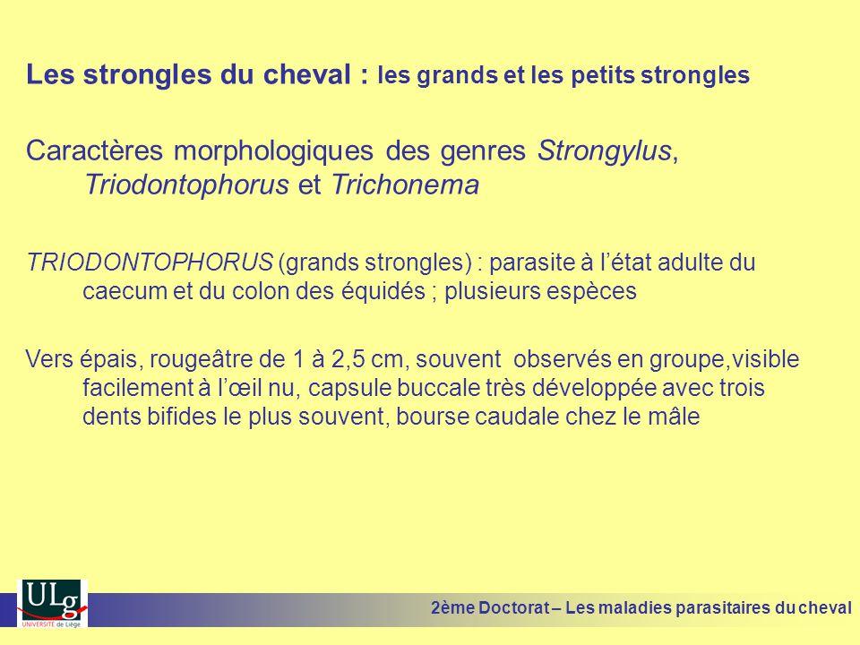 Les strongles du cheval : les grands et les petits strongles Caractères morphologiques des genres Strongylus, Triodontophorus et Trichonema TRIODONTOP