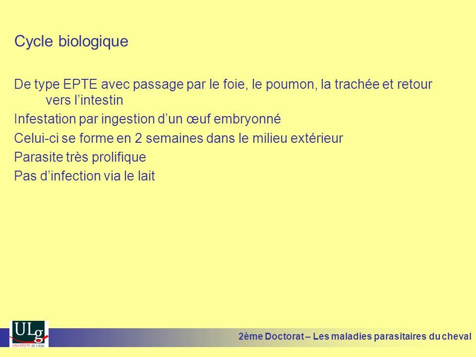 Cycle biologique De type EPTE avec passage par le foie, le poumon, la trachée et retour vers lintestin Infestation par ingestion dun œuf embryonné Cel