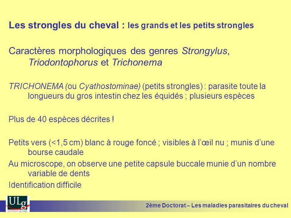 Les strongles du cheval : les grands et les petits strongles Caractères morphologiques des genres Strongylus, Triodontophorus et Trichonema TRICHONEMA