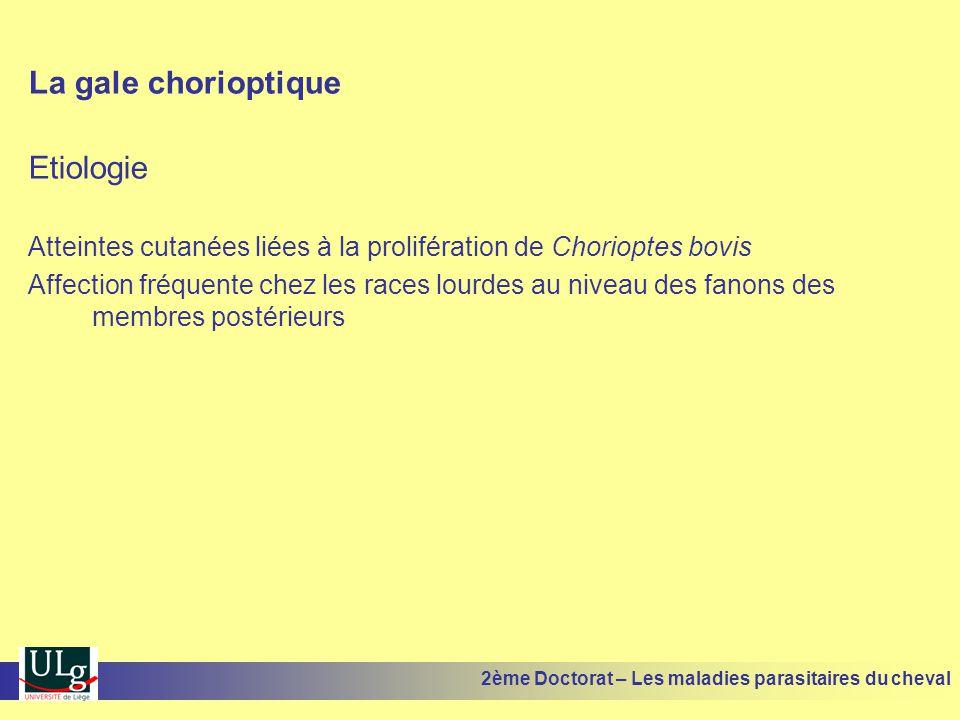 La gale chorioptique Etiologie Atteintes cutanées liées à la prolifération de Chorioptes bovis Affection fréquente chez les races lourdes au niveau de
