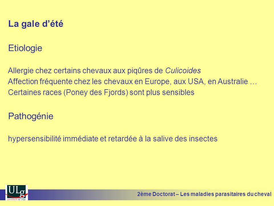 La gale dété Etiologie Allergie chez certains chevaux aux piqûres de Culicoides Affection fréquente chez les chevaux en Europe, aux USA, en Australie